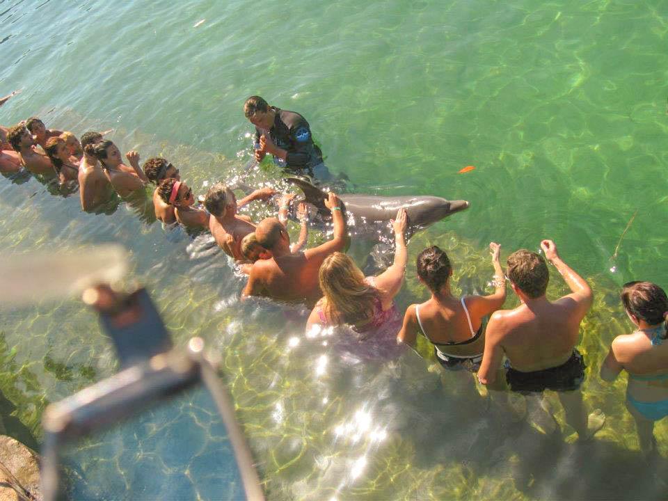Swim with the dolphins, Varadero, Cuba