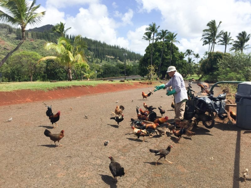 How Many Food Trucks Are On The Big Island