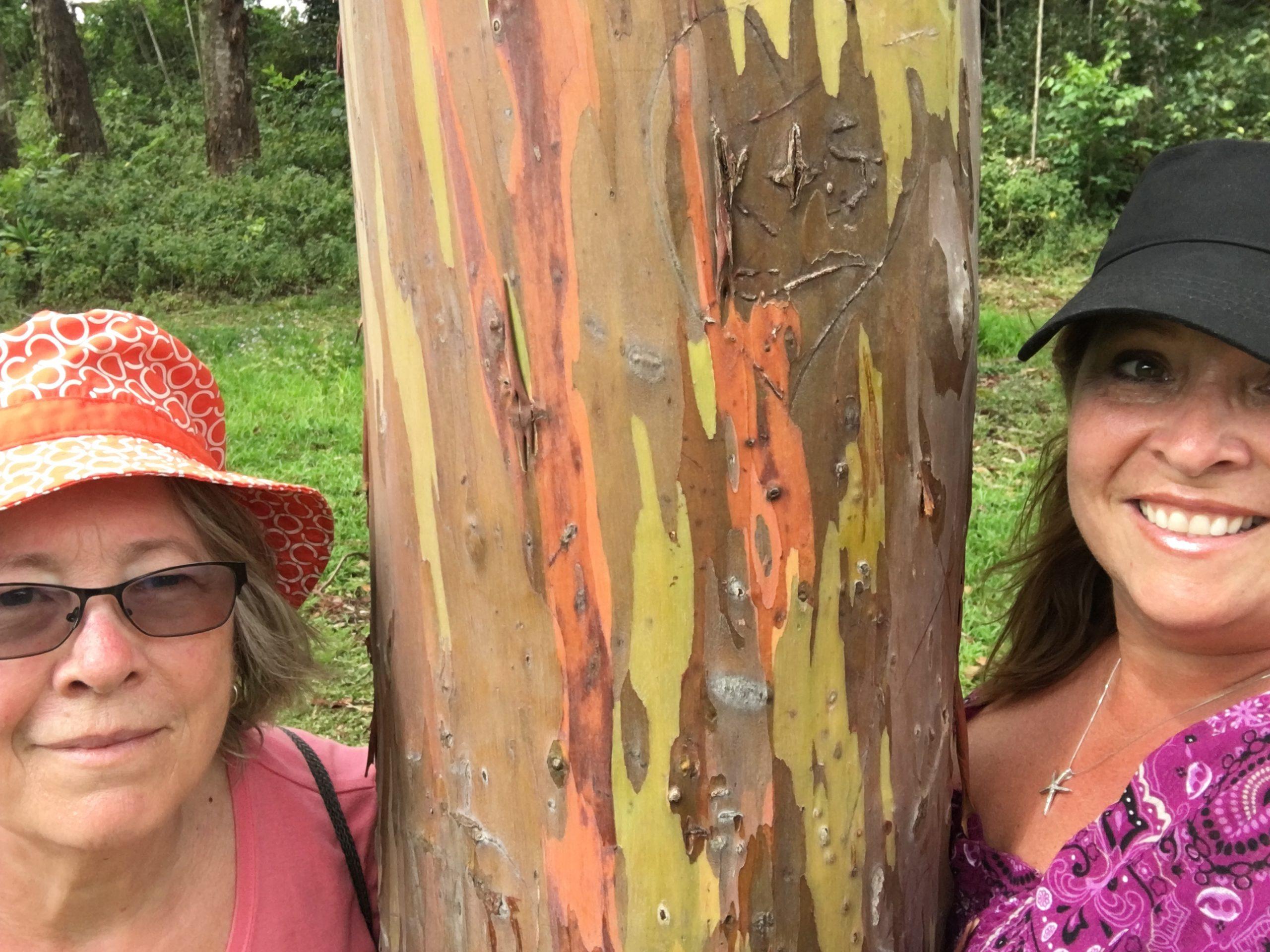 Rainbow eucalyptus at the Keahua Arboretum, Kauai, Hawaii