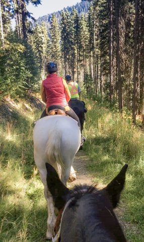 Horseback Riding Sun Peaks Stables