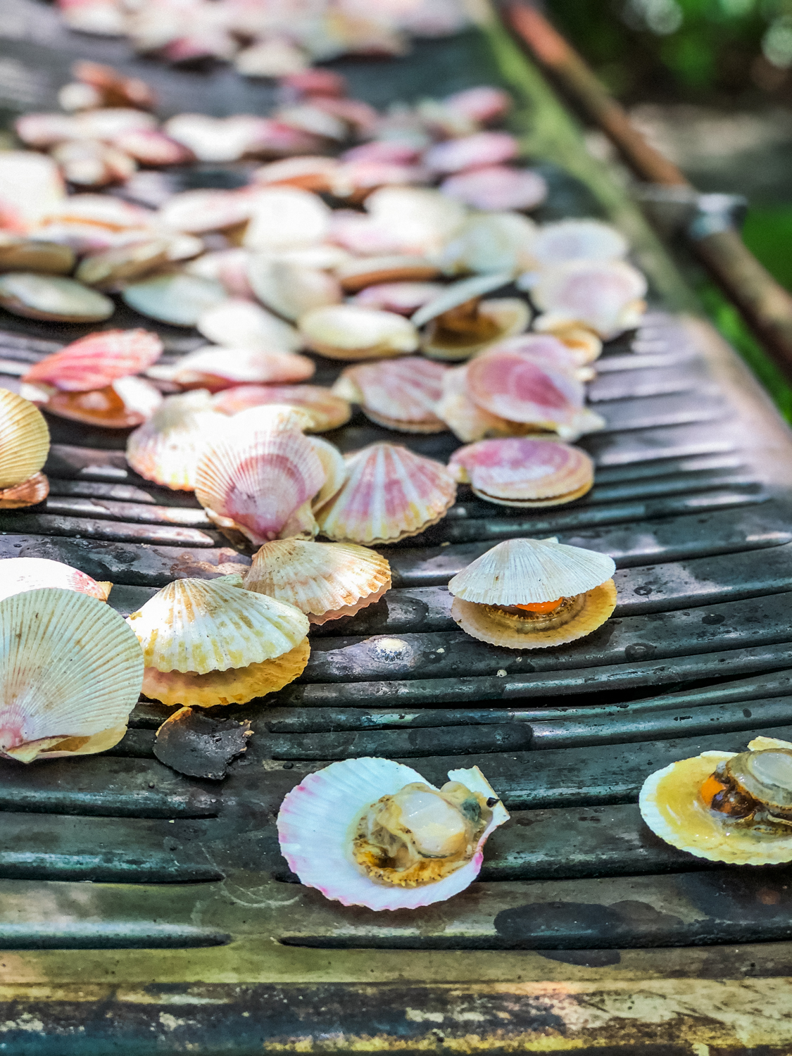 Barbecued Scallops
