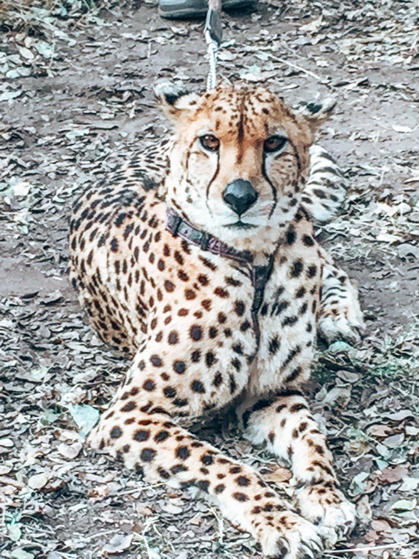 Wild is Life Sanctuary, Harare, Zimbabwe