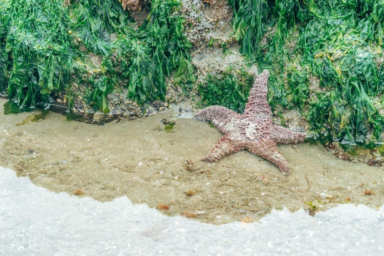 starfish tofino, bc
