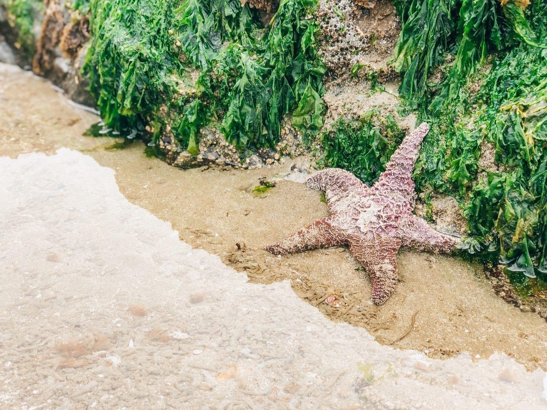 Starfish, Tofino, BC