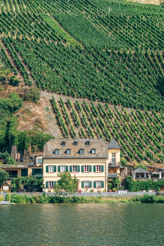 german vineyards moselle valley