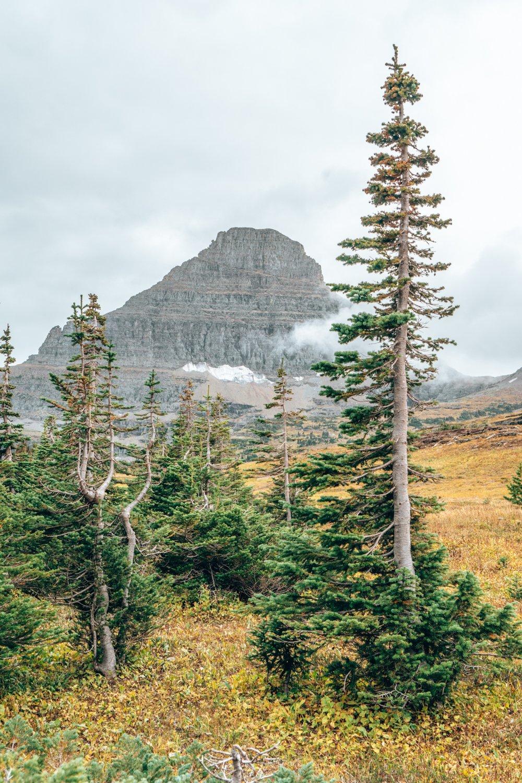 Montana, Logan Pass, Glacier National Park