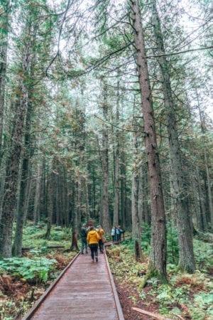 Trail of the Cedars, Glacier National Park, Montana